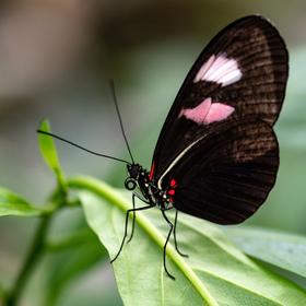 Motýlí :-)