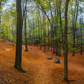 Lesní cesty na Kokořínsku