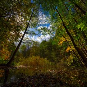 Krása barev podzimu v Bělském lese.