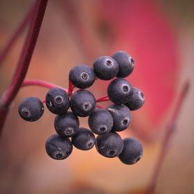 Podzimní detaily... (2)