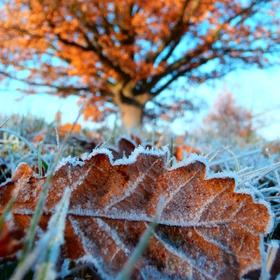 Záchvěvy zimy