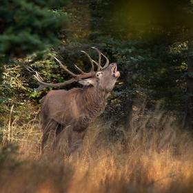 letošní podzim v přírodě (6)