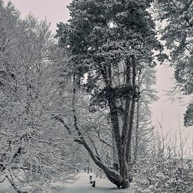 Strom roku 2014 České republiky