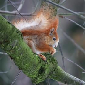 V klidu na stromě