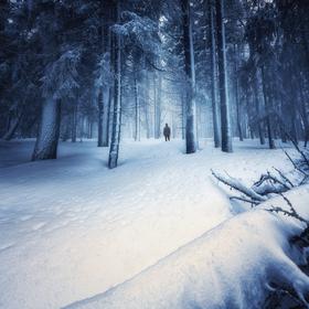 Tajuplným lesom