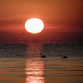 Flamingo sunrise