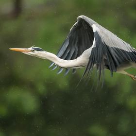 Létání mezi kapkami jarního deštíku ...