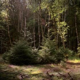 Lesní zátiší VI