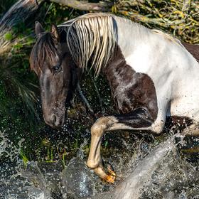 Kůň ve vodě