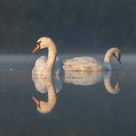 Hmlisté ráno na jazere