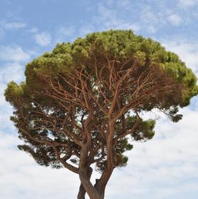 Flora na Capri