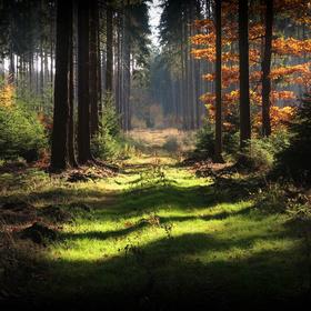 Lesní zátiší XIX