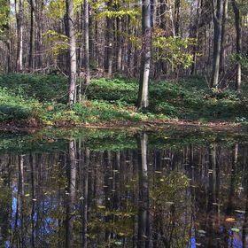 U rybníka za humny