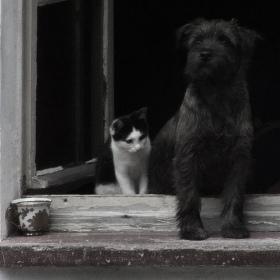 pejsek s kočičkou