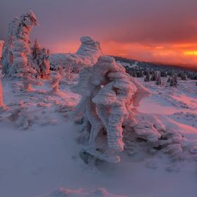 Zimní vetřelci II.
