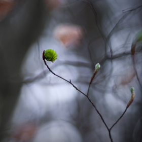 Příchod jara