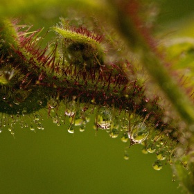 Ostružiní v jarním dešti
