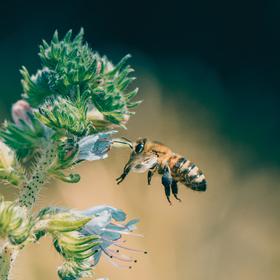 Hadinec a včelka