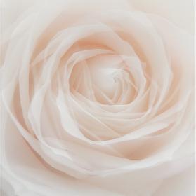 Tři růže