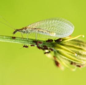 Hmyzí rodinka