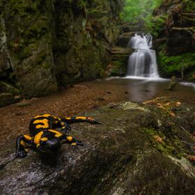 Strážce vodopádu