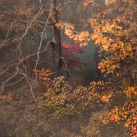 Magické okno do lesa