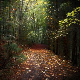 Lesní cestou II