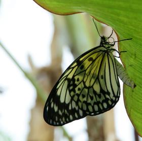 z říše motýlů