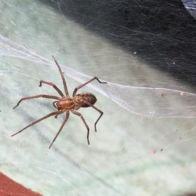 Pavoučí království