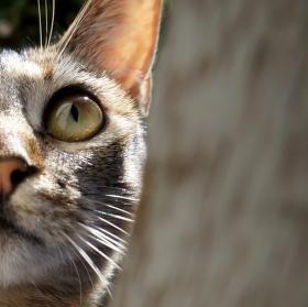 Kočka z Laurel Place