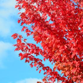 """rudý"" říjen 2011"