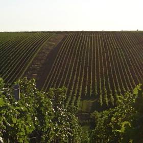 Vinohrad, kam se podíváš.
