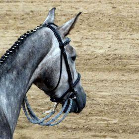 Za zády koně