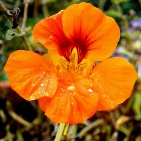 jedna oranžová :-)