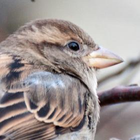 Vrabec v ZOO
