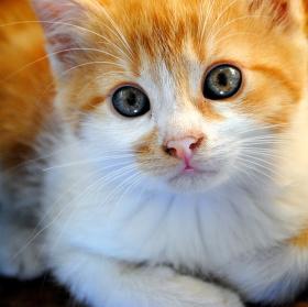 Krása v očích