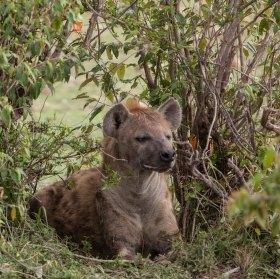 Kenya_Masai Mara