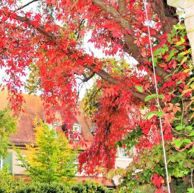Podzim, v mých očích