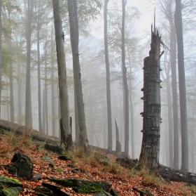 Podzim na Sokolím vrchu