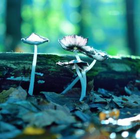 Obyvatelé kouzelného lesa