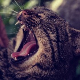 unavená kočka