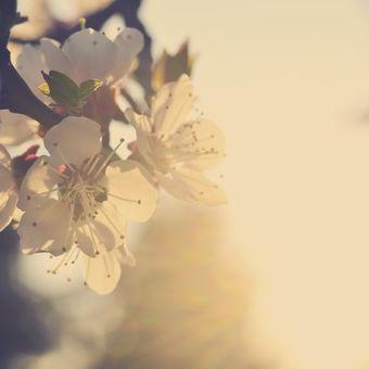 Květnová