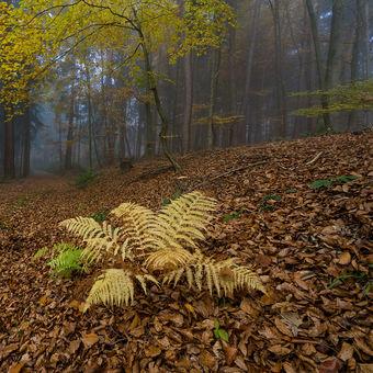 Když do lesa zavítá podzim