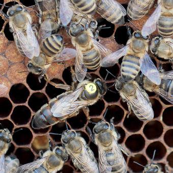 Včely s matkou