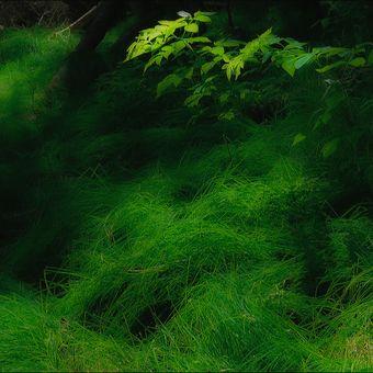 V lesním zátiší