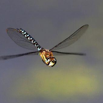 Letovka