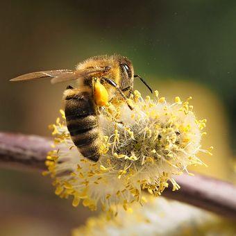 Odvážná včelka ...
