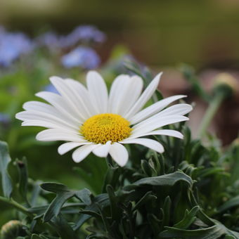 Kráska v zahradě... VIII. (colorová)