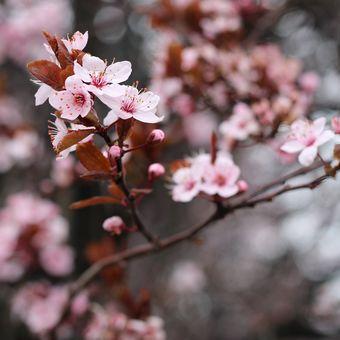 Jarní pohlazení...♥
