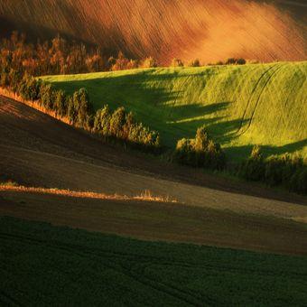 La Sughera ( Toscana )